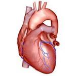 Angína Pectoris – srdcová angína