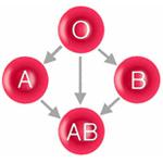 krvne-skupiny