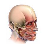 Periférne ochrnutie tvárového nervu