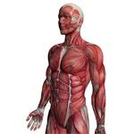 Čo sú svaly?