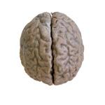Mozgové pologule