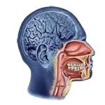 Nosová dutina