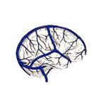 cievy-v-mozgu